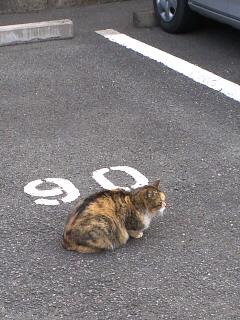 駐車場に猫さん