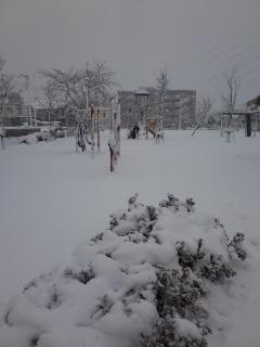 公園に雪積もった
