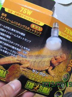 ライティング爬虫類