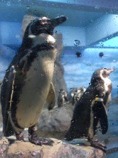 江ノ島水族館のペンギンさん