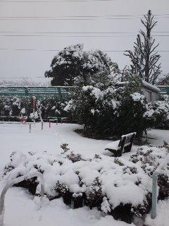 近所の公園雪で真っ白